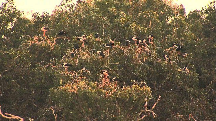 The Wildlife in Northern Queensland