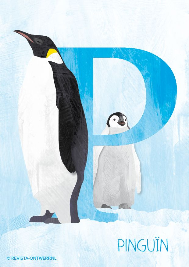 Pinguïns in de sneeuw, een winters tafereel. Bij de keizerspinguïn broedt het mannetje het ei uit tijdens de zuidelijke winter in juli en augustus bij temperaturen van -70 graden! (bron: Wikipedia) Brrr…   Elke week een illustratie uit het alfabet voor kinderen: revista-ontwerp.nl.