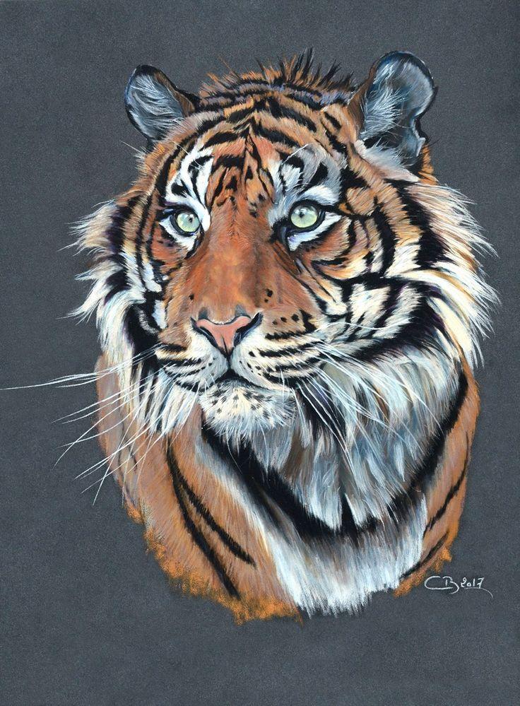 Tigre de Sumatra - Offre spéciale | Artiste Animalier