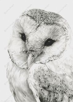 barn owl are so pretty