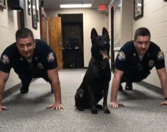 1236 best Law Enforcement\/K9,Horses images on Pinterest Police - k9 officer sample resume