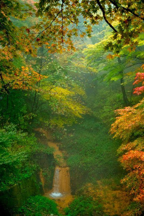 「もみじはし」から見える温泉の滝と紅葉