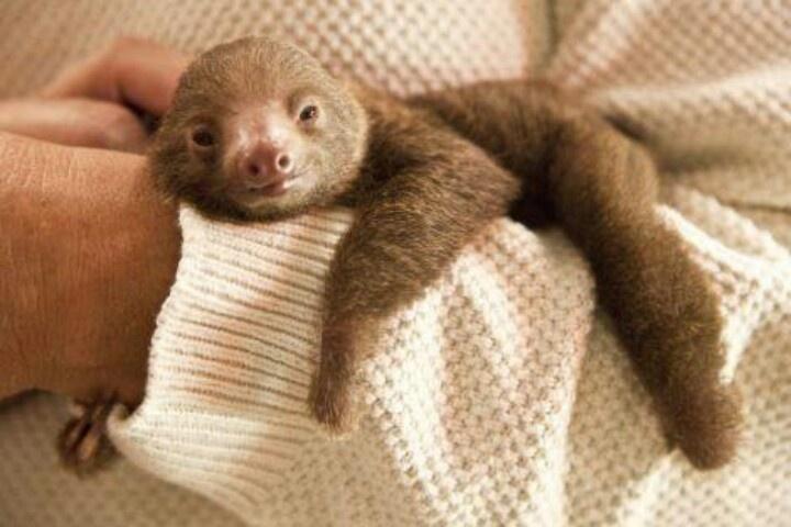 Baby bradipo!