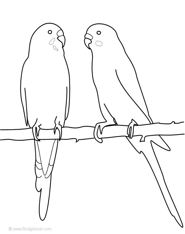Wonderful Parakeet Coloring Pages Page 2 11274 Bird Coloring