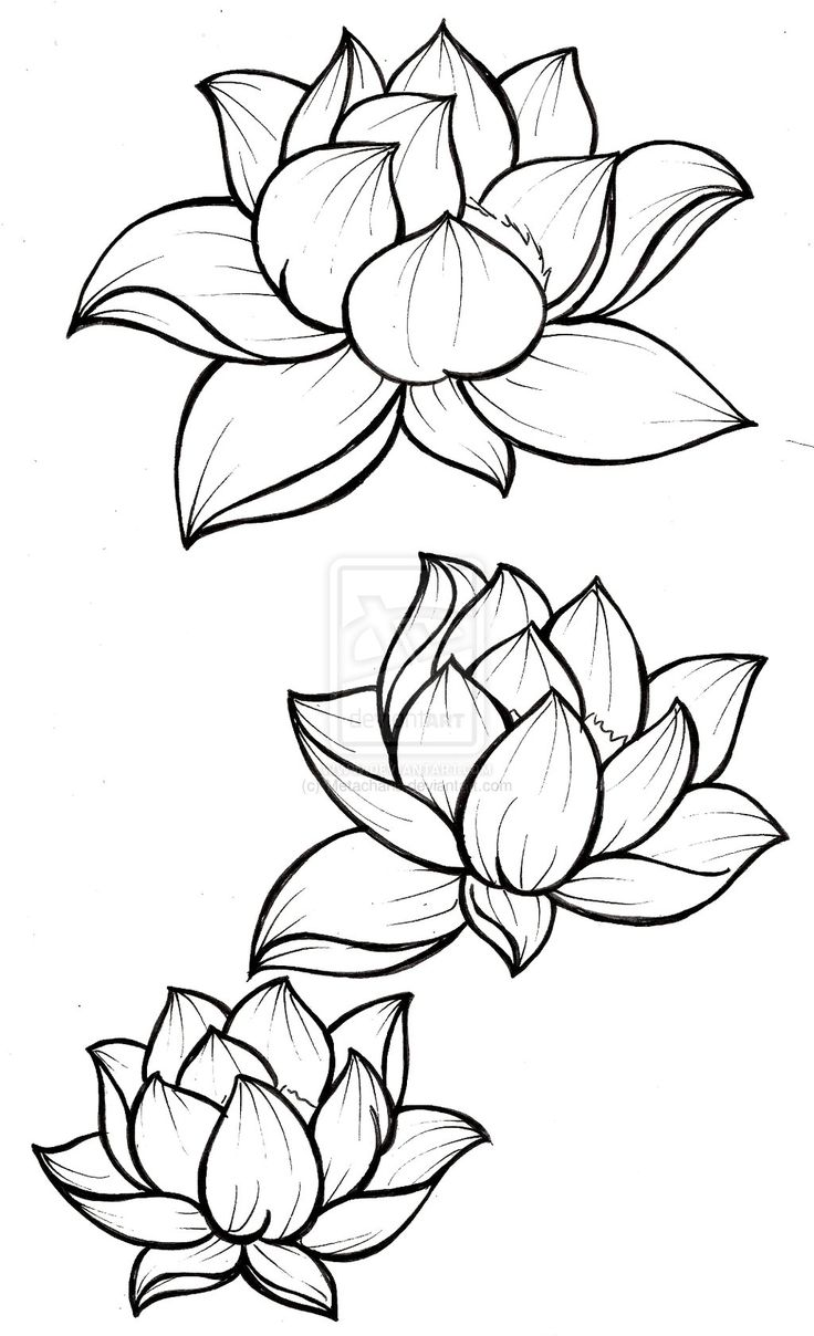 Best 25 Lotus Tattoo Design Ideas On Pinterest Mandala Flower And