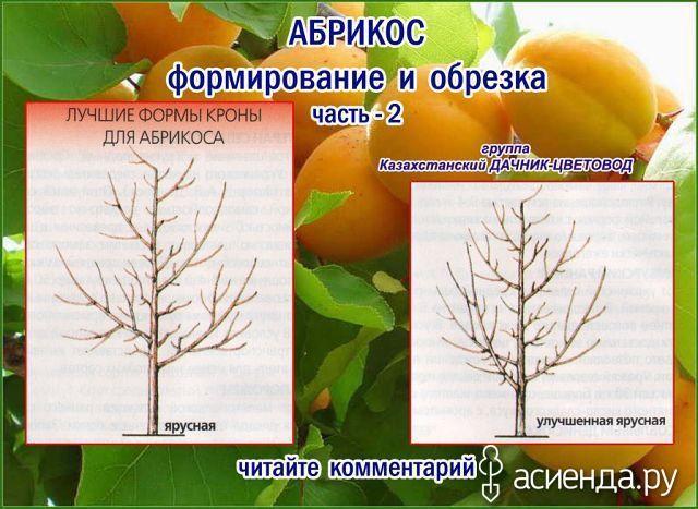 Как и обещала продолжим обучаться обрезке деревьев, кустарников.: Группа Плодовые деревья и кустарники
