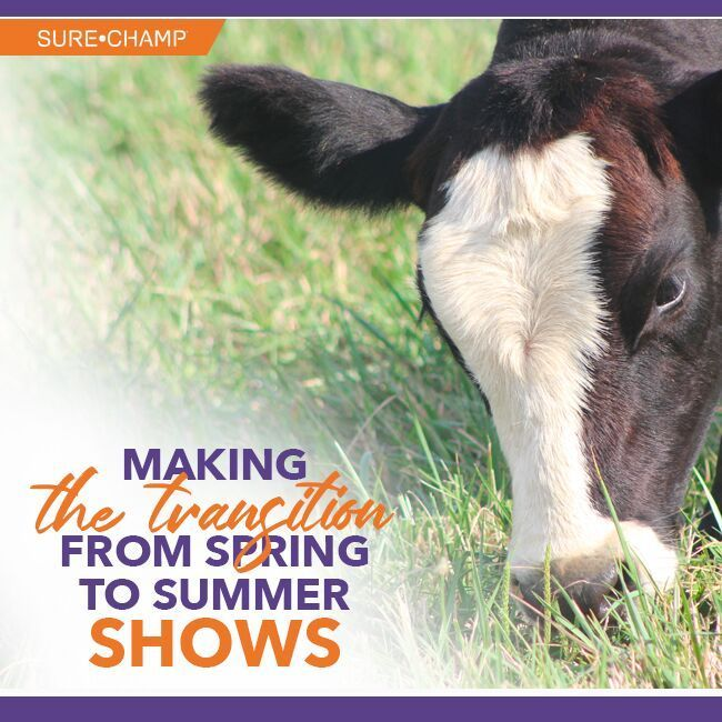 Making the Transition from Spring to Summer Shows | Show