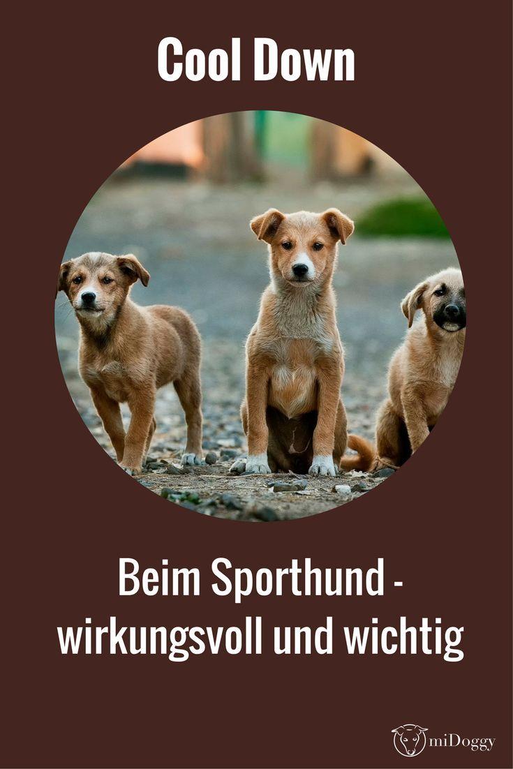 Jeder Sporthund sollte nach dem Sport ein Cool Down machen. Wie das am besten funktioniert erfährst du hier.