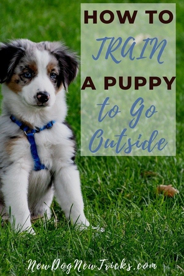 How To Potty Train A Puppy To Go Outside Puppy Training Dog Training Puppies