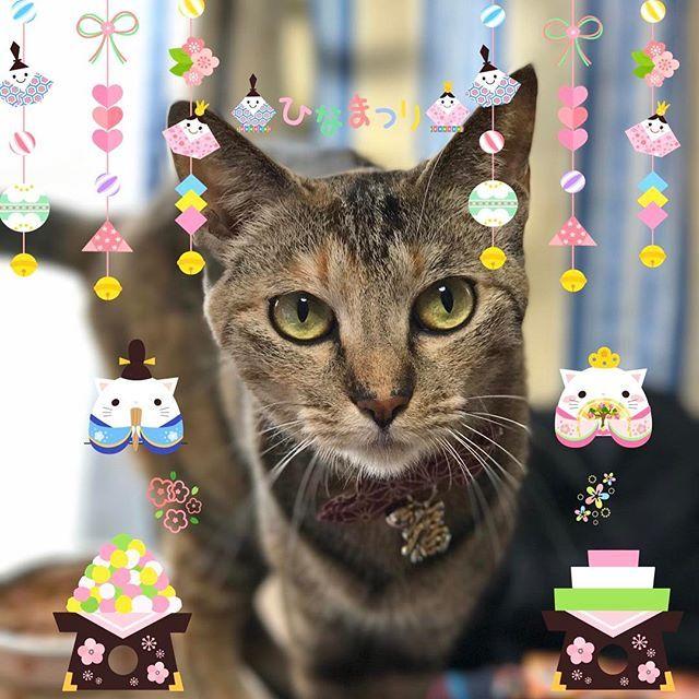 おはようございます😊❤️ .  今日はひな祭りー🎎🍡 .  ちゅーるパーティーしようかね😽❤️ .  #猫 #ねこ #にゃんこ #cat #catstagram #instacat #petstagram #幸せお届け隊  #ilovemycat #愛猫 #キジトラ #キジトラ部 #にゃんすたぐらむ