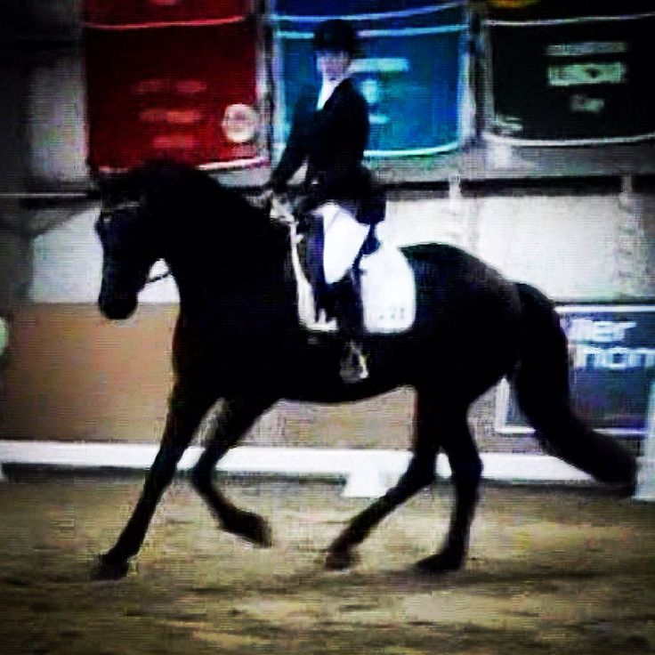 ARCHANGEL WHF Friesian Sporthorse Took first place in his Dressage classes at Carrots & Cocktails series II 2015. Owned and ridden by Tarrah Hall.
