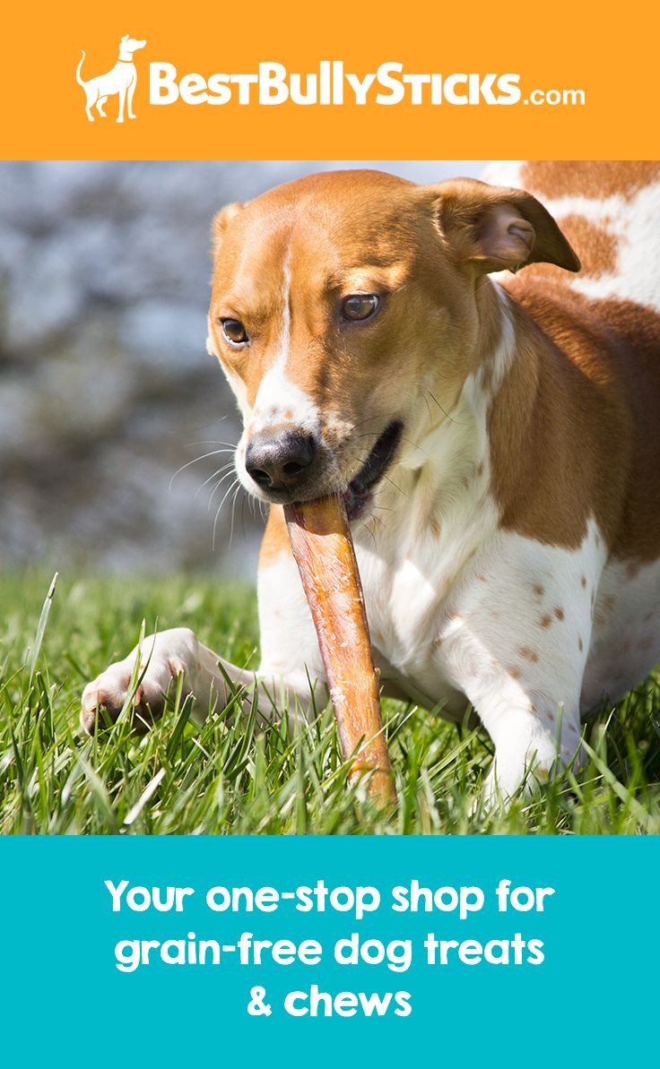 "Odor-Free Bully Sticks exist? Amazing! Available in 6"", 12"", and longer in a variety of thicknesses, your dog will love his healthy dog chew."