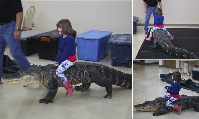 Shocking video of a child riding an 8ft ALLIGATOR sweeps the internet