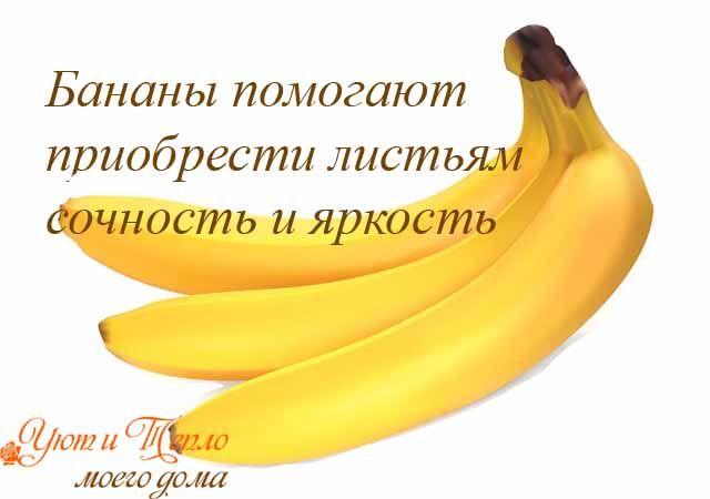 бананы - хорошая подкормка для комнатных цветов