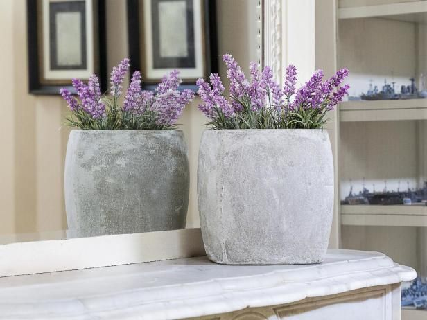 Learn about growing lavender indoors, including which types of lavender adapt to indoor settings, from the experts at HGTV Gardens.