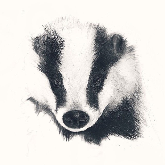Love the fade out effect Instagram media by cassandra_wolf_drawings - Badger Drawing Portrait