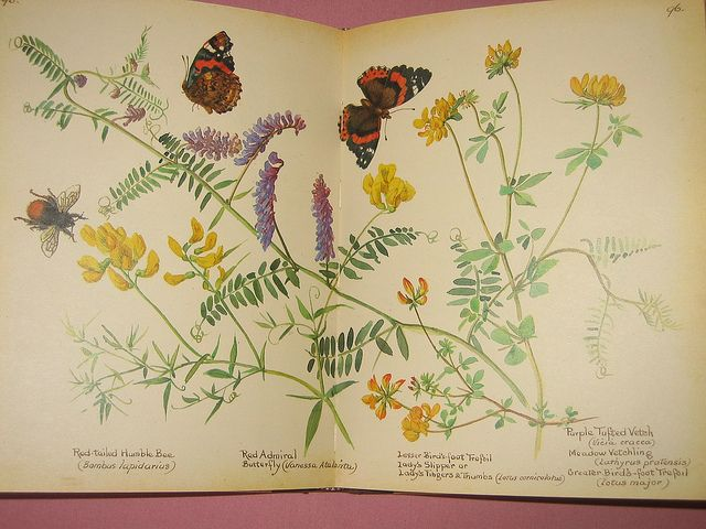 193 best images about herbarium on pinterest pressing