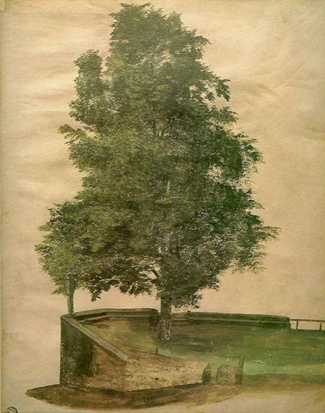 Albrecht Dürer (1471-1528), Linden Tree on a Bastion, 1494