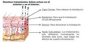 La piel humana esta constituida por tres capas: