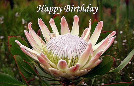 Strange Happy Birthday King Protea Card Printable Digital Photo Personalised Birthday Cards Sponlily Jamesorg