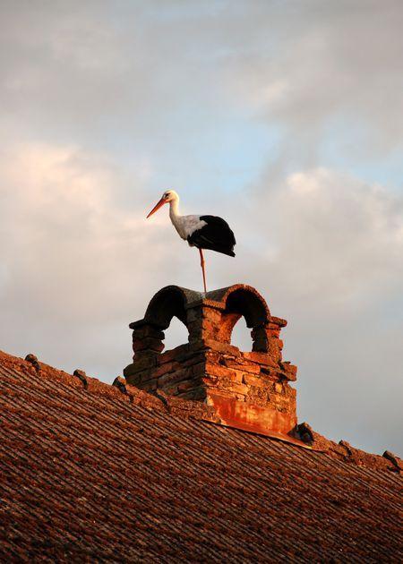White stork on a beautiful chimney. Fadd, Tolna province, Hungary
