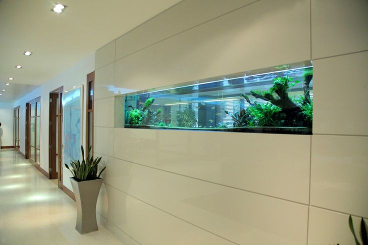 The aquarium's sleek lines follow the wall panelling to give a cool ambiance to this office corridor