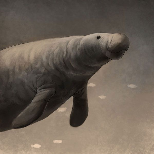 In memoriam: Top 10 recently extinct animals   Earth Archives