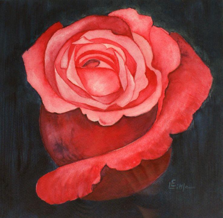 Rose, Watercolour by Elizabeth Little