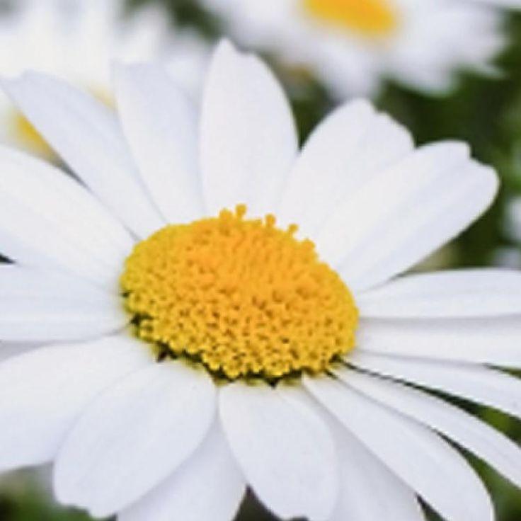 Popular Mein sch ner Garten Shop Special Das brauchen wir im Juni