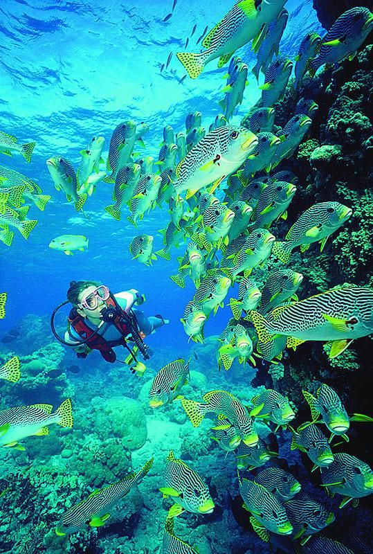 Cairns | Australia Australie