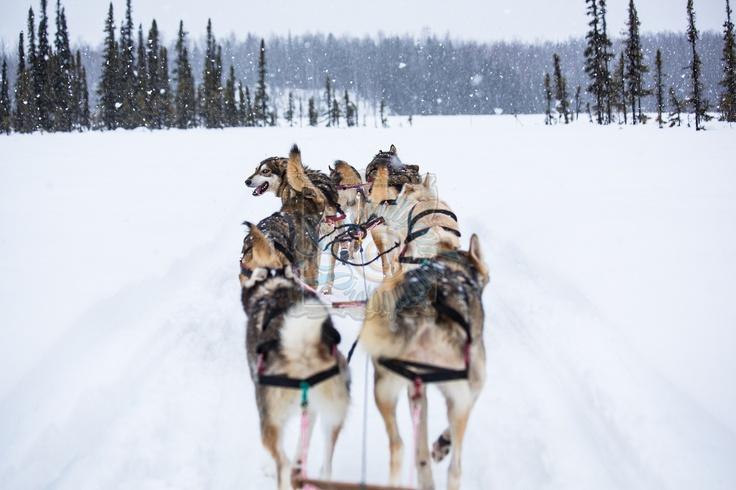 Dog Sledding   Alaska  Crystallyzed Photography  www.crystallyzed.com