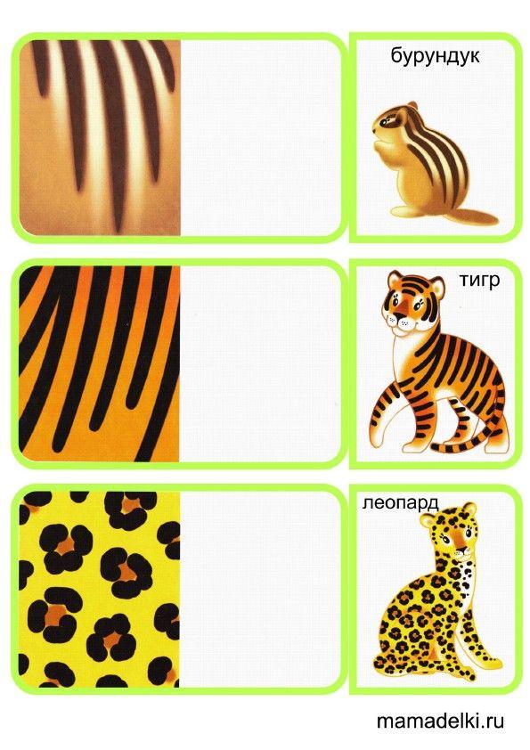 Más de 1000 imágenes sobre Science_Animals en Pinterest | Animaux ...