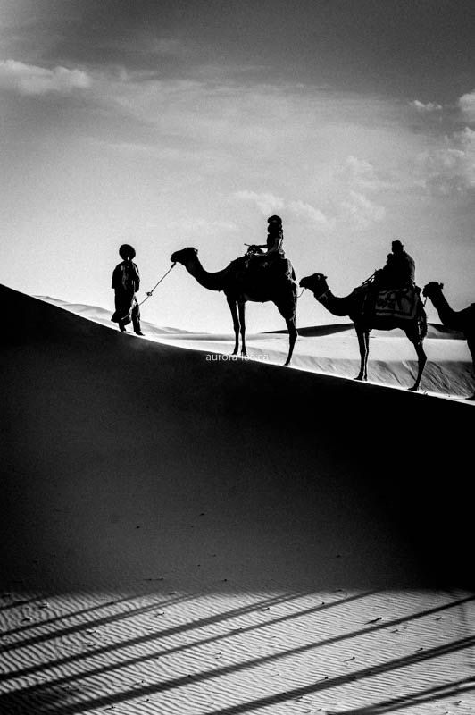 Camel Caravan  The couple of nights we spent in the Sahara were pretty amazing. Riding camels there and back? No so much. Did make for some great photos, though!
