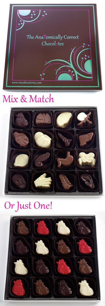 Visual Anatomy Limited : 16 Piece Mixed Box : Anatomically Correct Chocolate Gifts Unique Cute Doctors Medical Ideas Organ Donors Surgeons Creative Chocolates Gifts Boxes Columbus Ohio OH