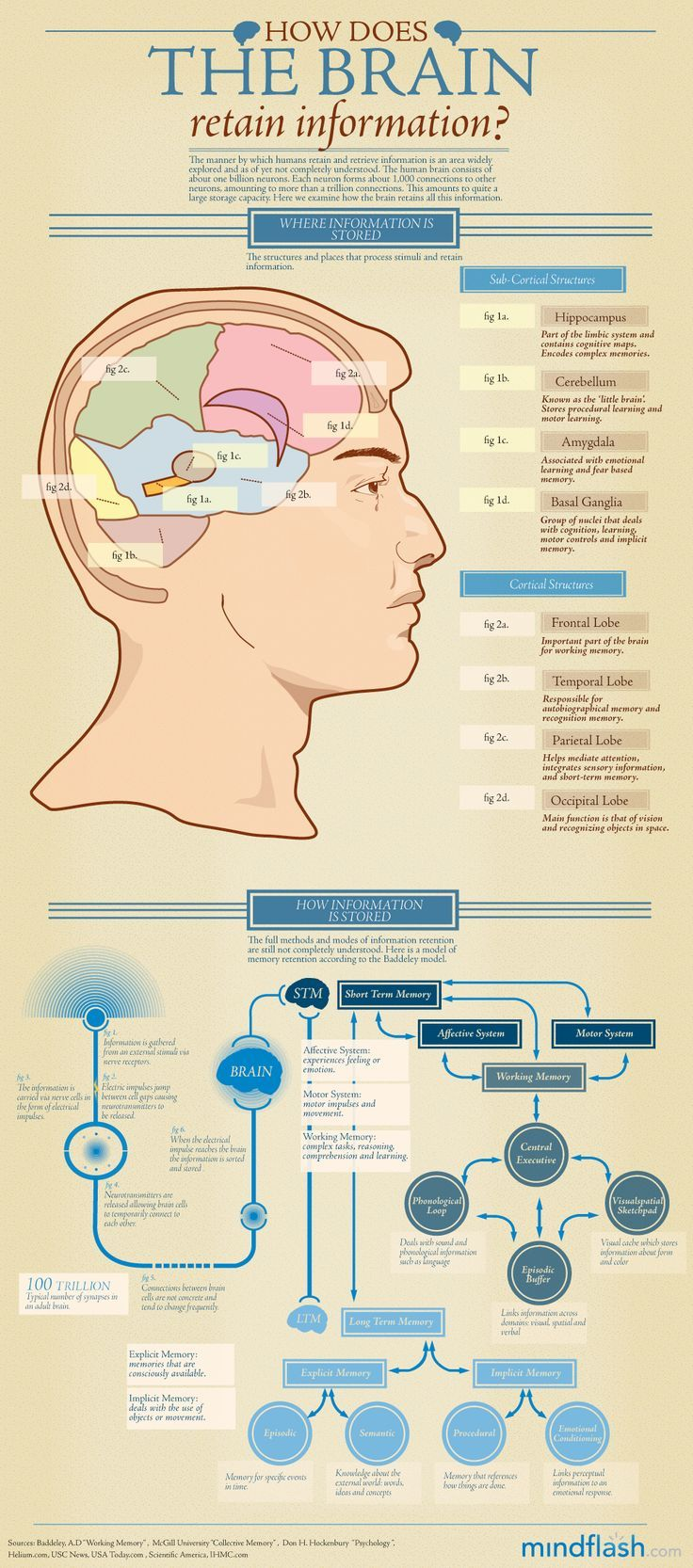 How does the brain retain information. (More information for me to retain.) :)