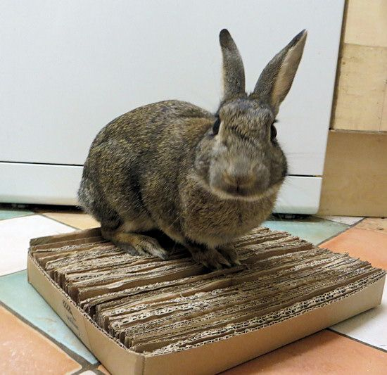 How to make a shreddable bunny mat out of an old cardboard box DIY Cardboard Shreddable Mat for Rabbits