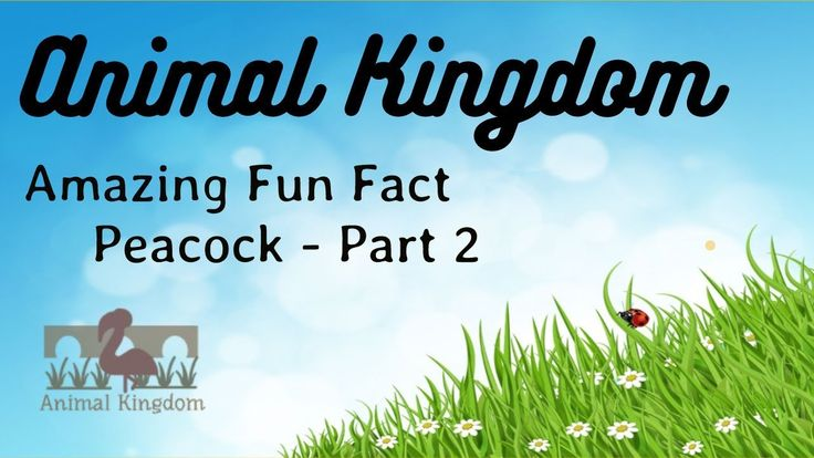 Animal Kingdom - Amazing Fun Fact about Peacock – Part 2