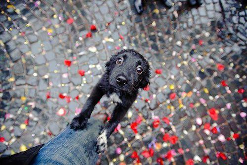 DAWWW..... Little puppy face.... :)...:):)