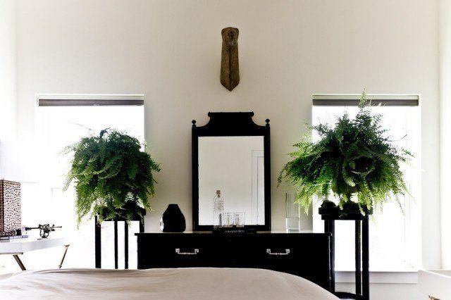 oasis-domicile-plantes-intérieur-chambre-coucher-fougères plantes d'intérieur
