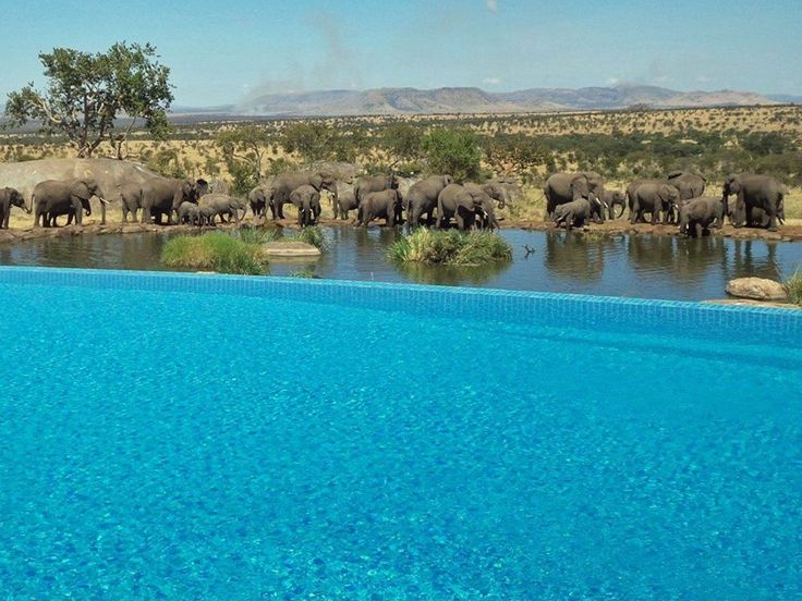 At this incredible pool in the Four Seasons Safari Lodge Serengeti in Tanzania you can get up close and personal with nature as elephants collect at a nearby water hole.