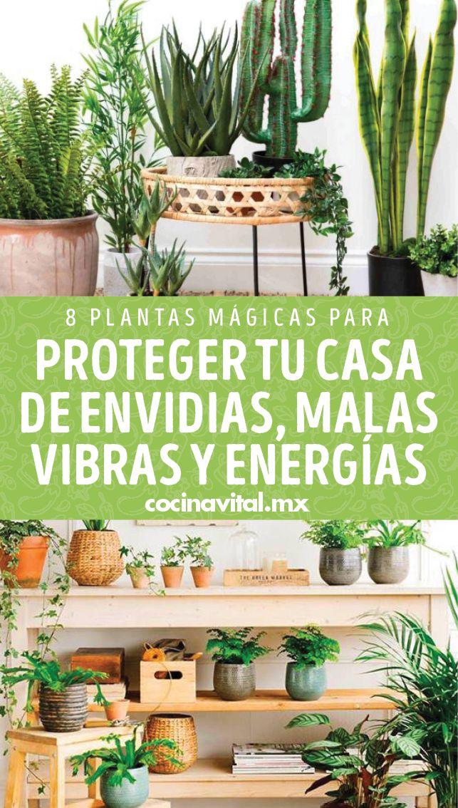 ¿Las plantas ayudan a la energía del ambiente? Las plantas tienen muchísimas funciones más allá de decorar, condimentan plantos, son regalos perfectos. Pero también representan un buen ejemplo de energías y aquí conocerás las mejores plantas para proteger la casa de buenas vibras, envidias y atraer energías positivas. Feng Shui, Relax, Backyard, Plants, Blog, Ideas, Gardens, Envy, Growing Plants