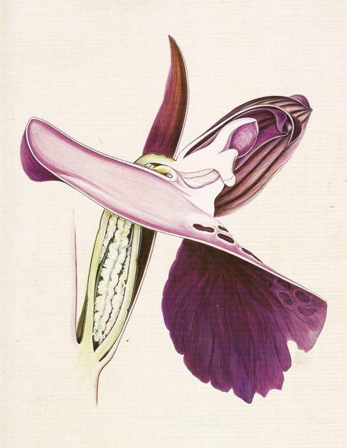 50 Best Botanica  Arthur Harry Church Images On Pinterest
