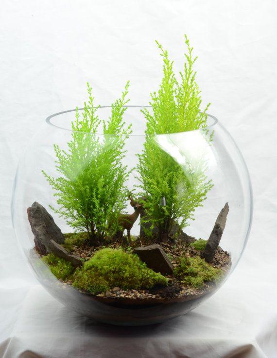 Woodland terrarium with Lemon Cypress, moss, and reindeer