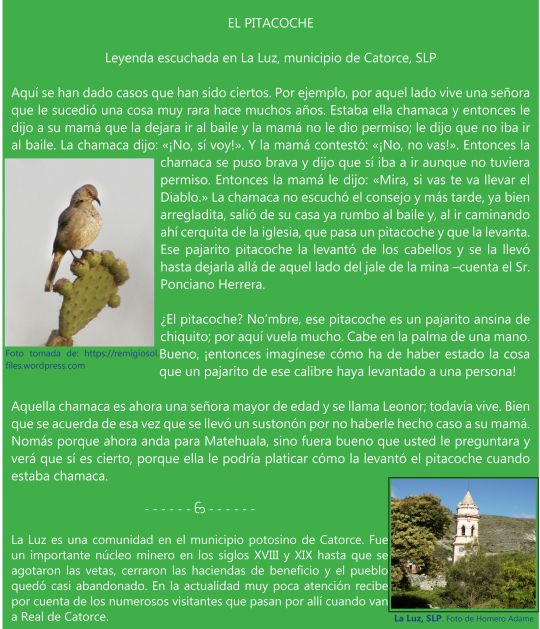 Astounding El Pitacoche Zoologico De Homero Adame 1 Mitos Y Complete Home Design Collection Papxelindsey Bellcom