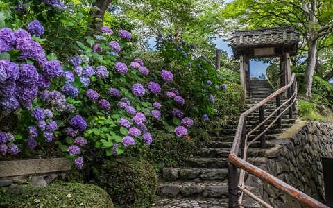 Kiotó, japán, tavasz háttérkép 226214