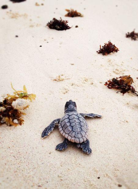¡Gracias amigos de BestDay por apoyar al #Tortugatón! Sigamos difundiendo la conservación de las tortugas marinas.