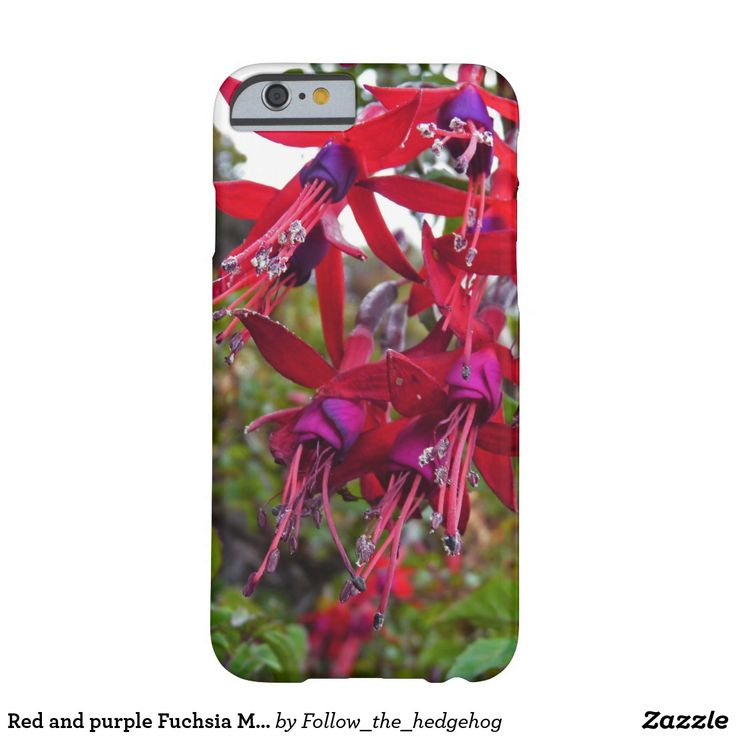Red and purple Fuchsia Magellanica Barely There iPhone 6 Case Red and purple Fuchsia Magellanica. Hummingbird Fuchsia or Hardy Fuchsia is a species of flowering plant in the Evening Primrose family, native to Patagonia. The picture was taken in Ushuaia, Argentina