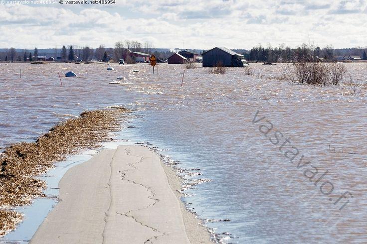Tie poikki - Kainastonjoki Kyrönjoki aallokko huhtikuu joki keväinen kevättulva lato liikennemerkki maalaismaisema maantie maaseutu maisema pellot pelto peltomaisema poikki tulva tulvavesi tulviva tuuli tuulinen vesi vetiset