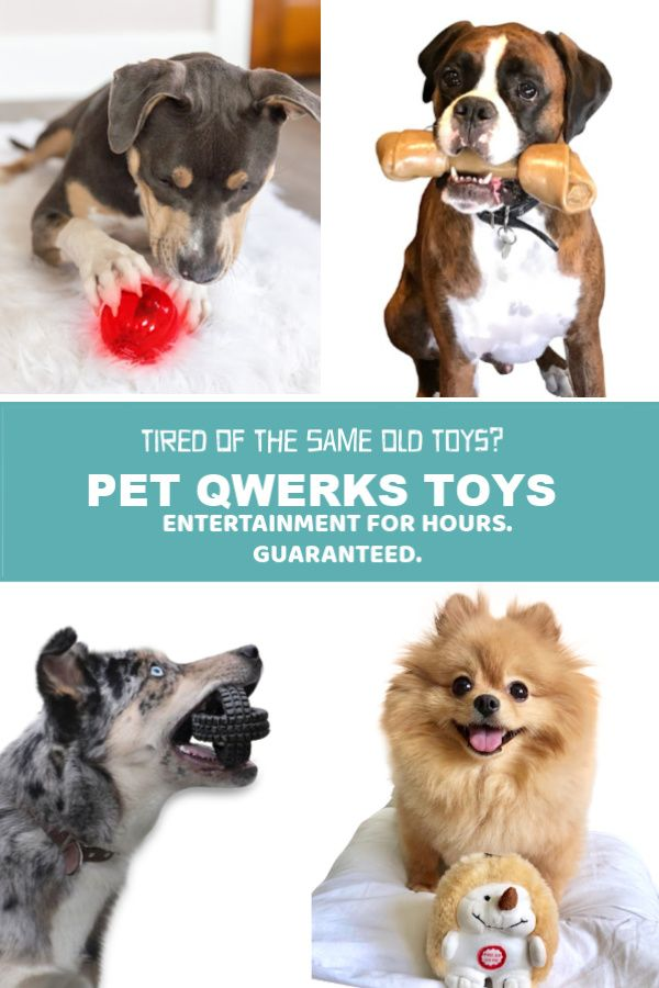 Give Your Devoted Best Friend The Toys That Play With Them
