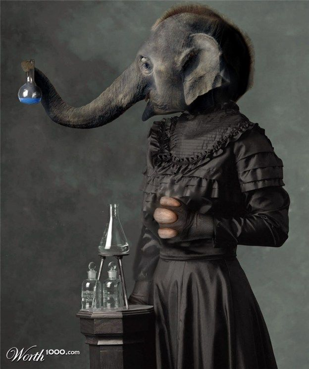 Elephant scientist..ha ha! #Elephant #Scientist